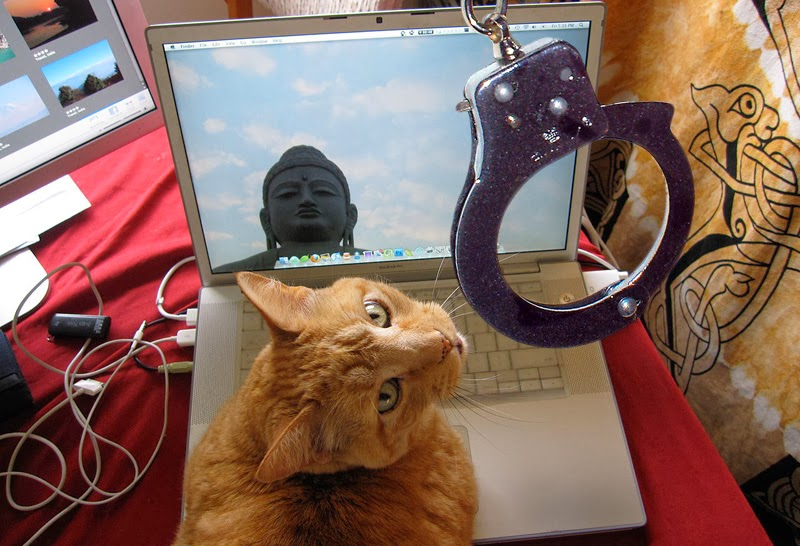 Cat arrested after using laptop