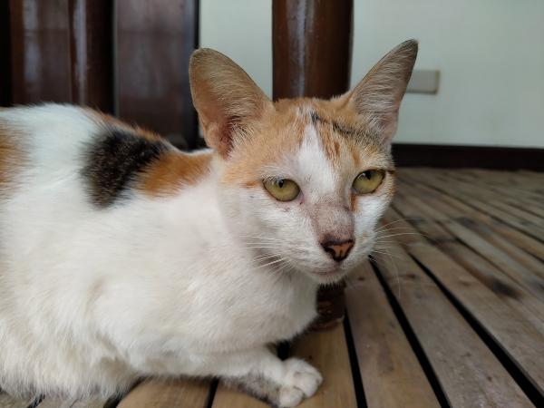 Cat by Realme 5i.
