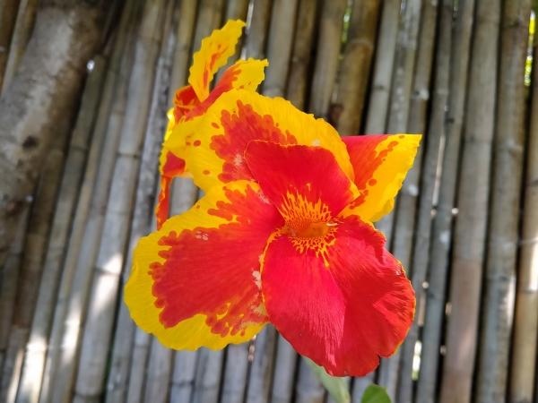 Flower by Realme 5i.