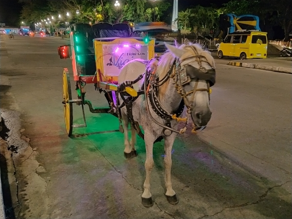 Realme-5i-sample-picture-night-mode-horse