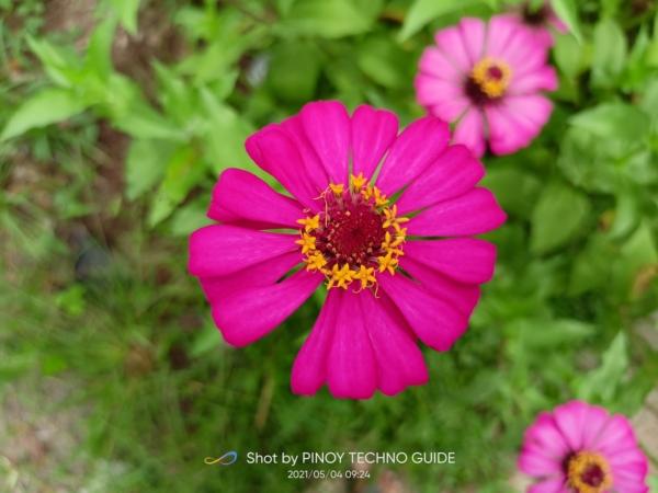 realme 8 sample picture (flower, default mode).